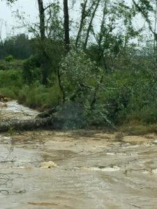 Hurricane Matthew tree